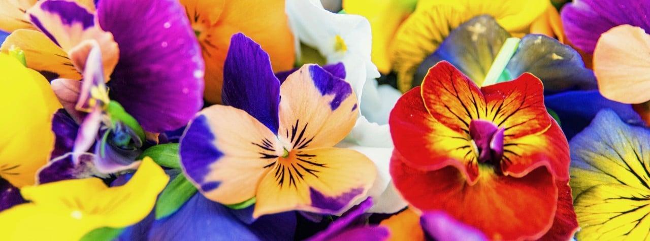 fiore eduli