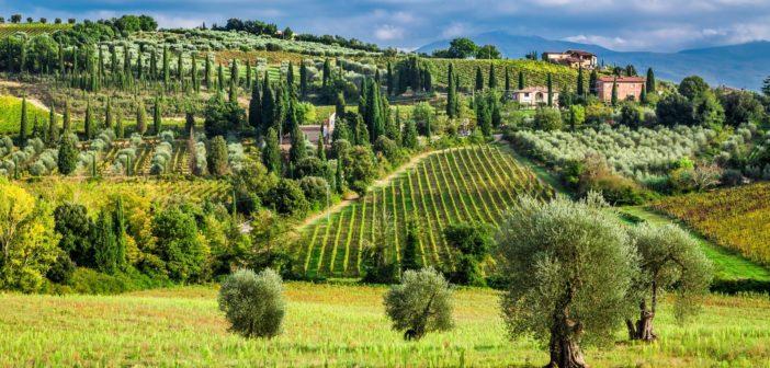 vigneto e oliveto